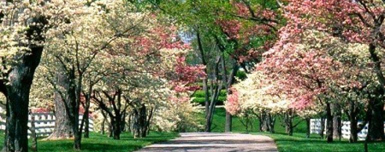 Куда лучше поехать на майские праздники? Отдых в Европе на майские праздники