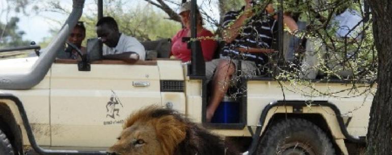 Особенности сафари в Африке