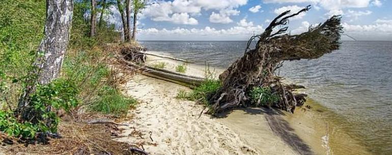 Куршская коса — песчаная коса длиной 98 км, расположенная на побережье Балтийского моря. Ширина колеблется от 400 метров (в районе посёлка Лесной) до 3,8 километров (в районе мыса Бульвикё, чуть севернее Ниды). Здесь на очень небольшом расстоянии друг от