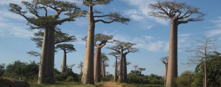 Мадагаскар — райский остров, примостившийся к боку Африки.