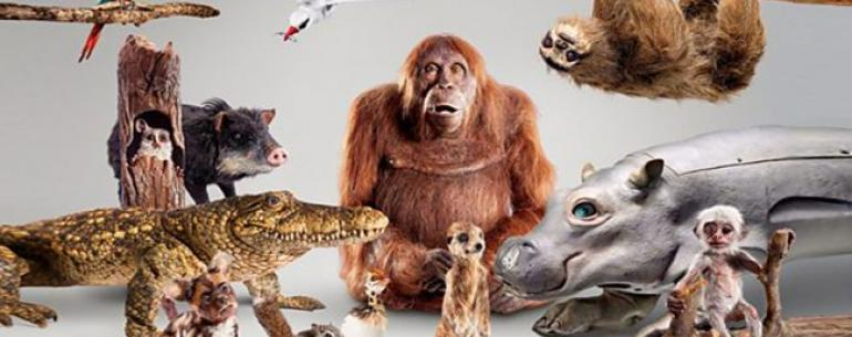 Роботы сняли для BBC новый сериал о животных