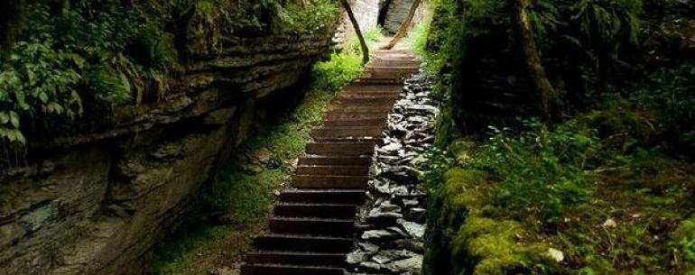 Тисо-самшитовая роща – таинственный музей редких и ценных деревьев, хранитель сказочных видов, мистического полумрака и вечной прохлады.