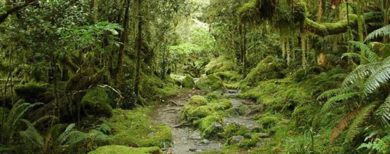 Новая Зеландия – красивейшая и загадочная страна, основное богатство которой – уникальная природа, заботливо охраняемая новозеландцами.