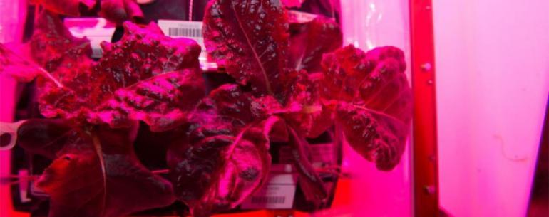 «Один большой лист для человечества»: экипаж МКС питается выращенным в космосе салатом