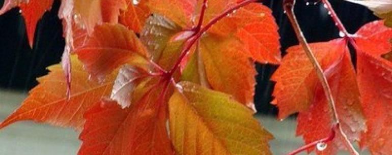 Хорошо, есть осень, она нежно и аккуратно готовит нас к холодам. Любимая осень. Время размышлений, рук в карманах, глинтвейна по вечерам и приятной меланхолии…