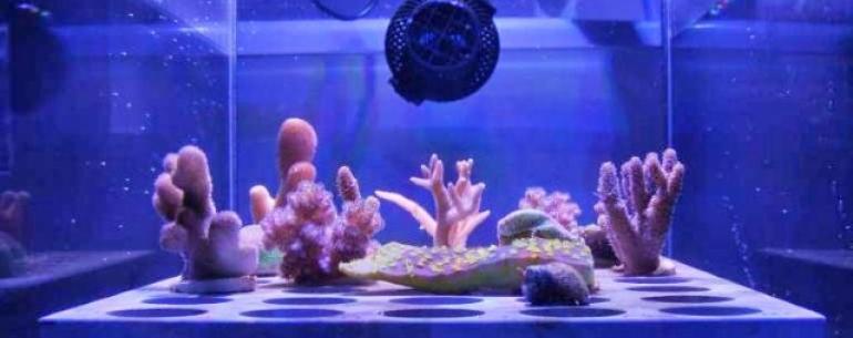 Плавающий солнечный щит кальция может защитить Большой Барьерный риф