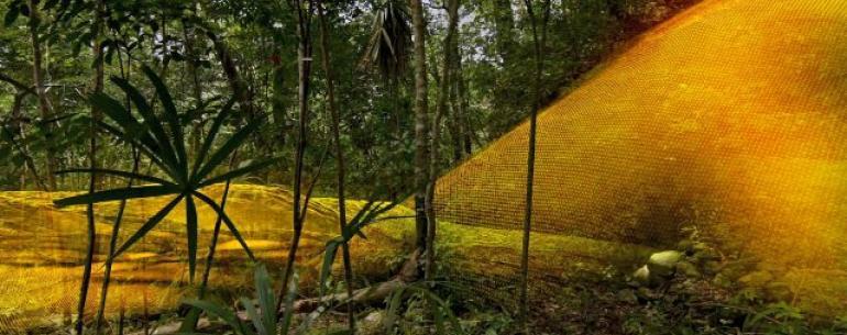 LiDAR раскрывает мега-город майя, скрытый в джунглях Гватемалы