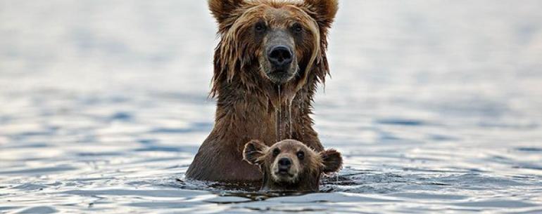 Эти животные научат быть хорошими родителями (Re.)