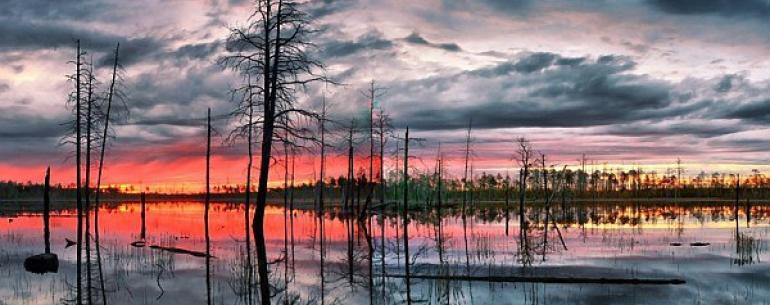 Васюганские болота — одни из самых больших болот в мире, расположены на территории Томской, Омской и Новосибирской областей, между крупными сибирскими реками Обью и Иртышом. Площадь болот огромна: протяженность с запада на восток — 573 км, с севера на юг